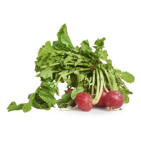 radishes © seedling commerce.jpg